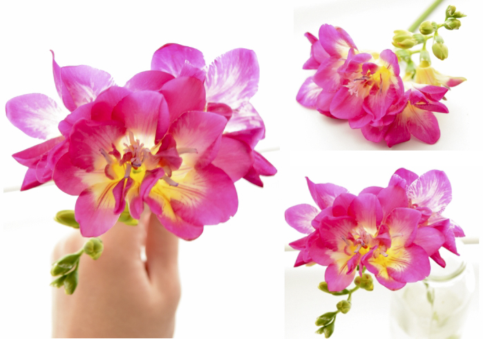 collagefreesia